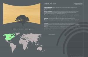 8 American Ash